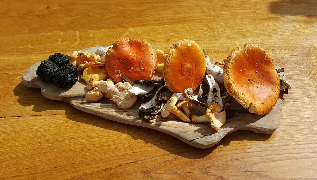 Gljive